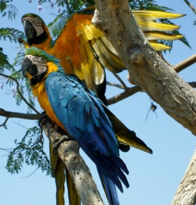 papegaaien3